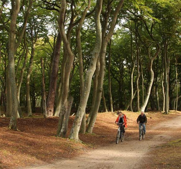 Naturparadies an der Ostsee: EinFahrradweg führt unweit des Darßer Weststrands durch denWald. Viele Strecken, zum Beispiel in der Rostocker Heide, eignen sich auch für Handbiker.