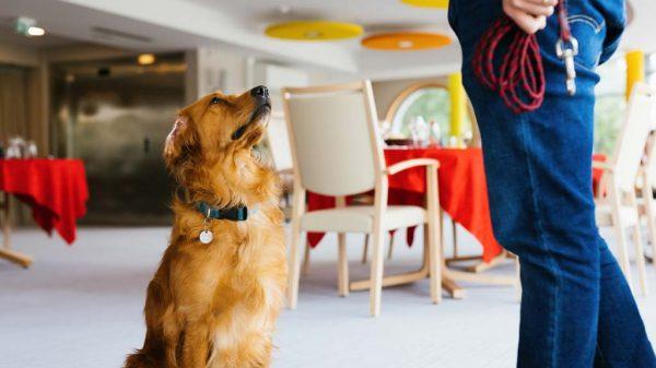 Hundeführerin Christelle Schreiber steht neben Pokaa.