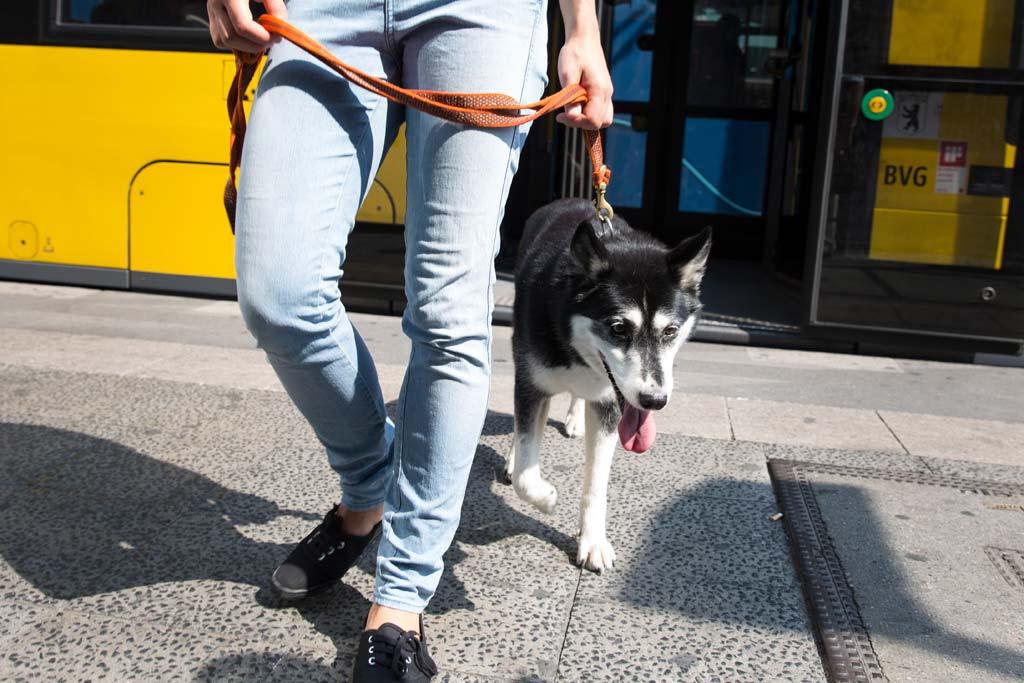 Hund mit Halter steigt aus einem Bus aus