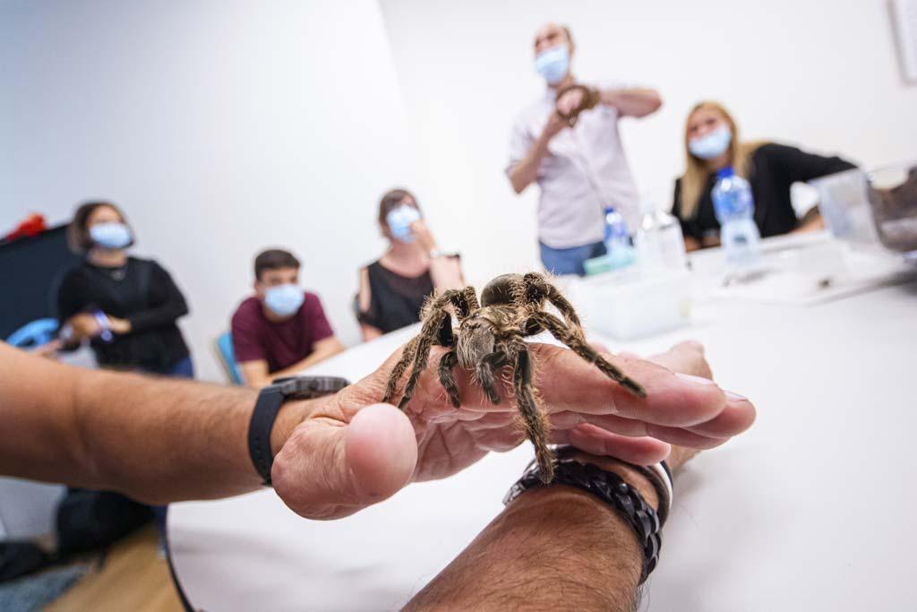 Ein Teilnehmer hält während eines Kurses über Angstmanagement und Behandlung von Tierphobien eine Vogelspinne auf der Hand.